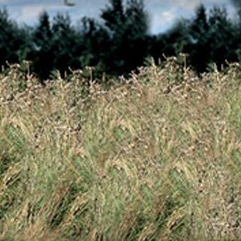 Tuincenter Van Gucht - Aalst - Ruwterreinmaaiers